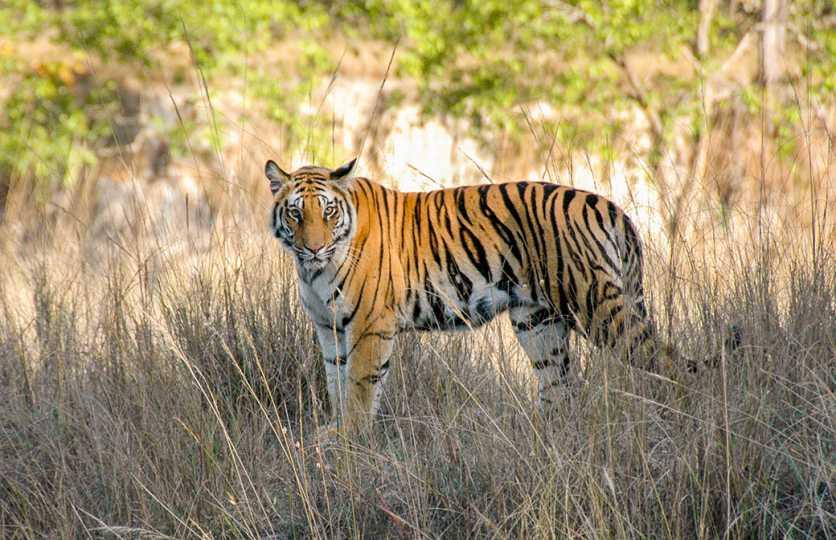 Go Wild in India
