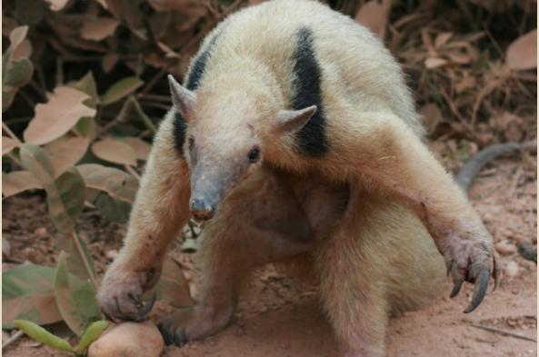 Say goodbye to Brazil's amazing creatures