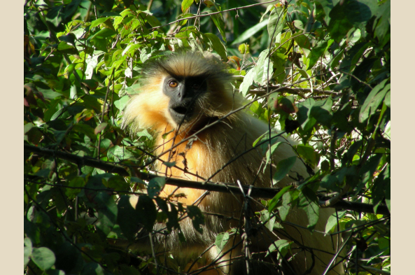 Keep an eye out for primates as your trek ends