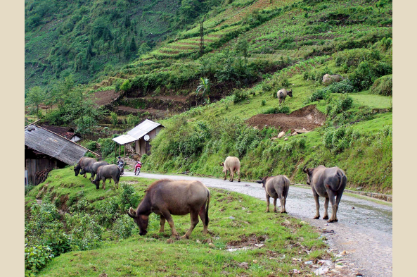 Soak up the scenes in serene Sapa