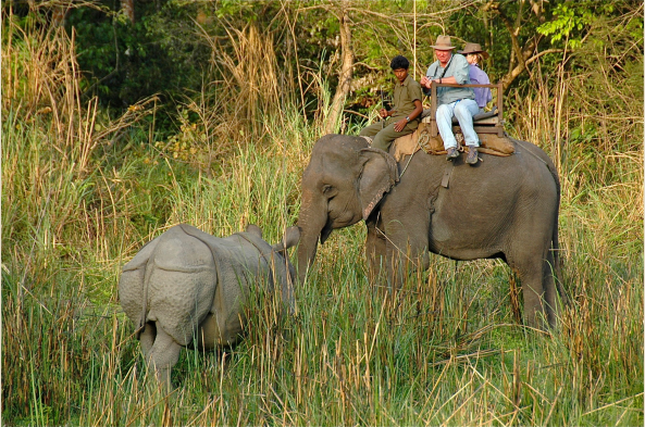 Explore Chitwan on an elephant's back