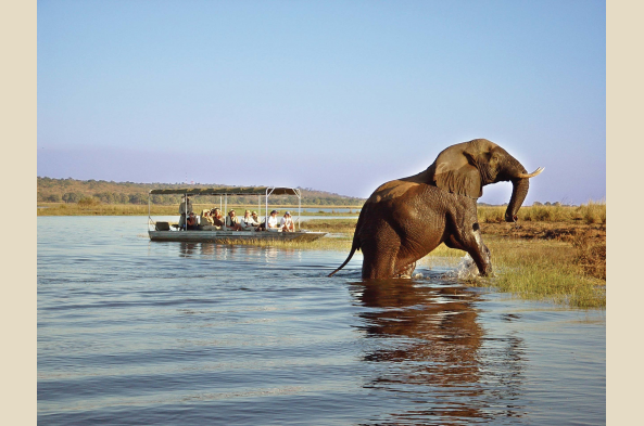 Embark on an unforgettable game viewing boat cruise