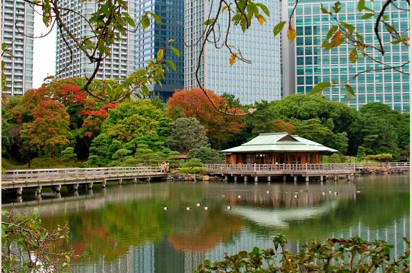 Tokyo park in autumn