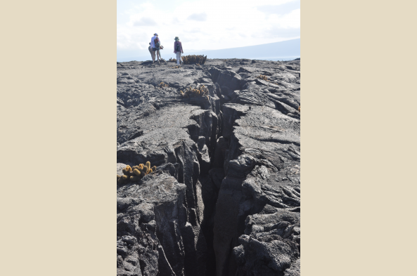 Walk the pahoehoe lava landscape of Fernandina