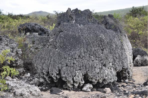Marvel at coral skeletons on land, result of volcanic uplift