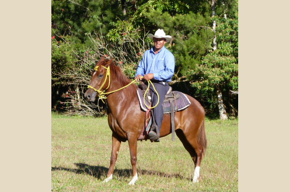 A farmer rides his horse at Janson Coffee Farm