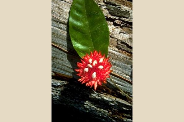 Savor the unique flora