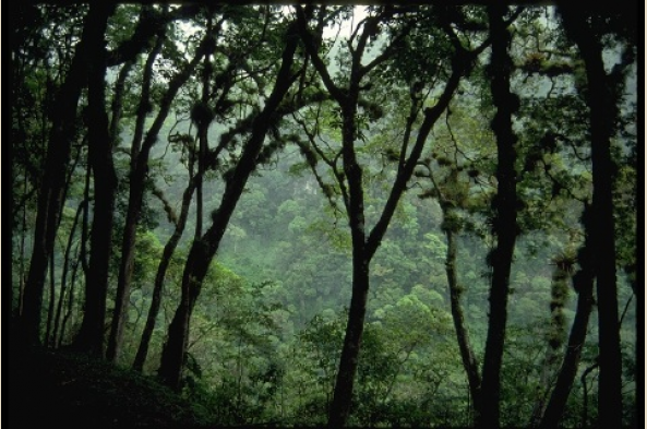 Explore exotic cloud forests
