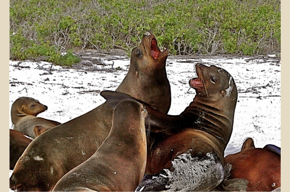 Frolicking Sea Lions wish you safe travels