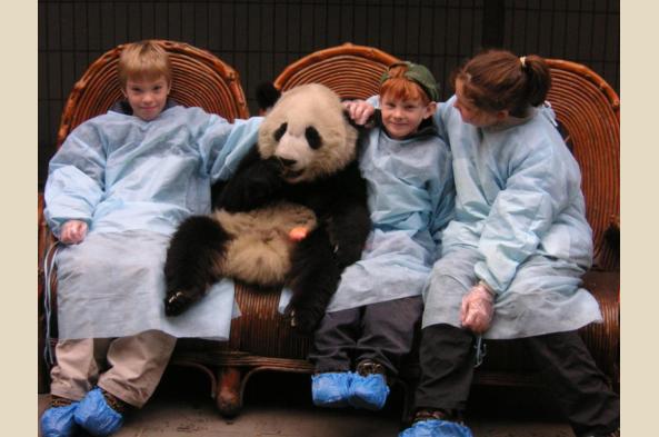 Meet giant pandas!
