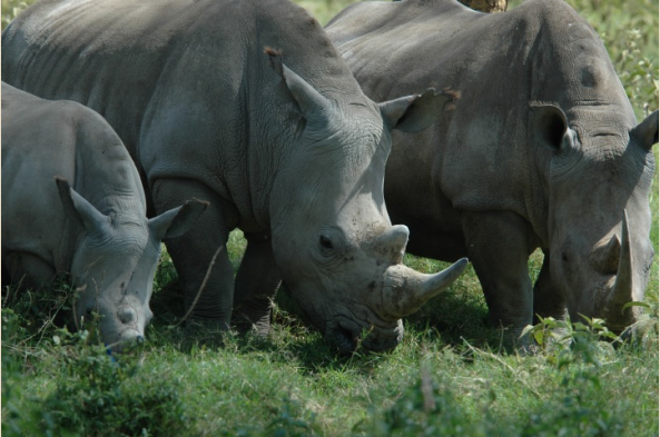 Look for the big five at Ngorongoro Crater
