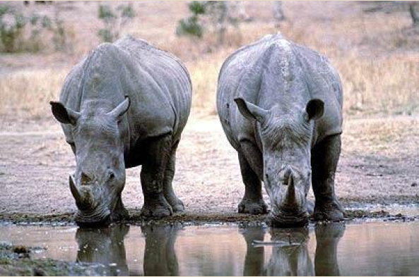 See dynamic duos sharing the watering hole