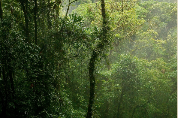 Experience the dense tropical rainforest from the understory to the canopy