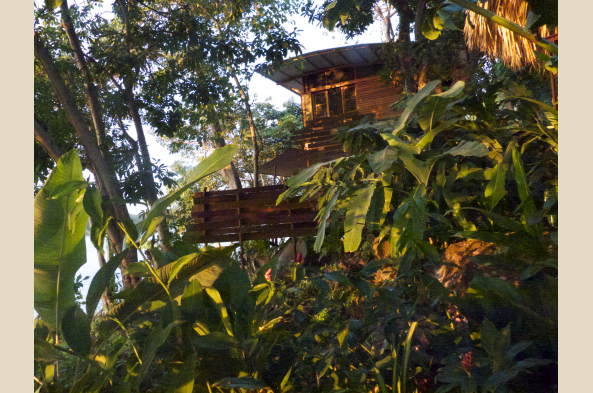 Comfortable rooms with verandas are up in the treetops, overlooking the lake.
