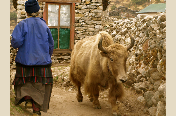 Walking the lanes of Namche