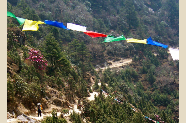 Begin your trek amidst pine forests and Buddhist prayer flags