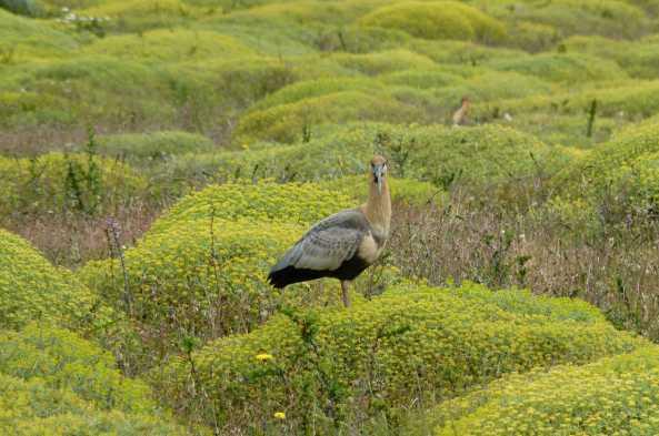 Spot endemic wildlife