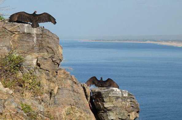 Birds on the cliff walk