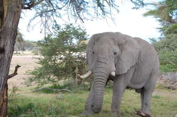 You will see elephants every day