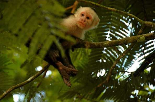 View wildlife from the rainforest canopy