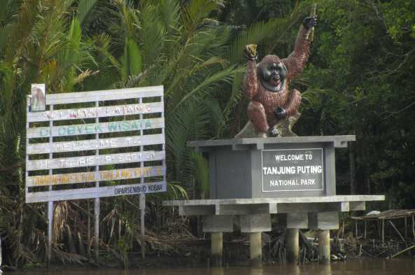 Float up the Sekonyer River into Tanjung Puting National Park
