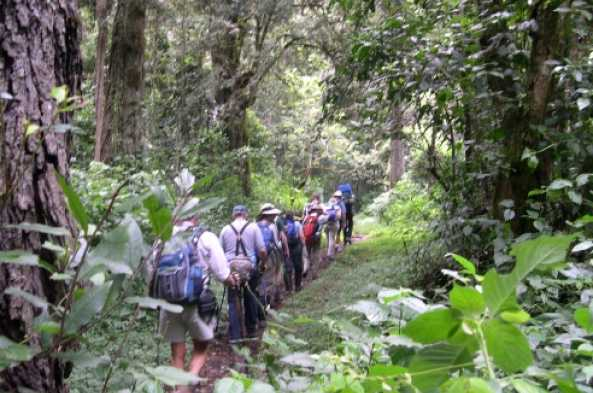 Hike through lush vegetation at lower elevations