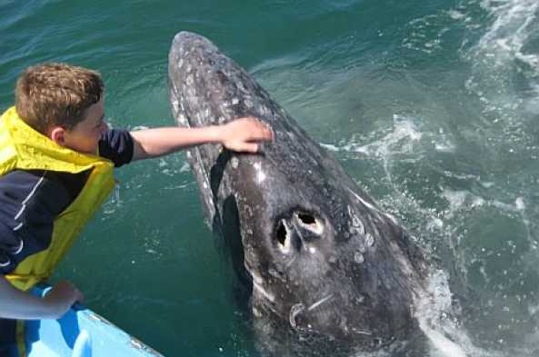 Petting a whale in Magdelena Bay