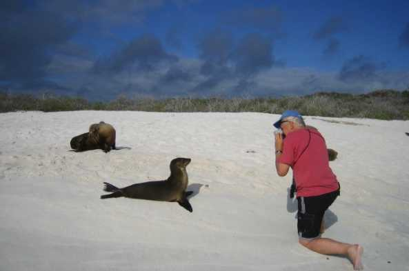Sea lions and other creatures are unafraid of humans