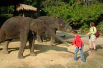 Hang out with elephants