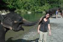 Spend some quality time with elephants