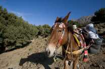 Load up the mules with gear and set off on your trek